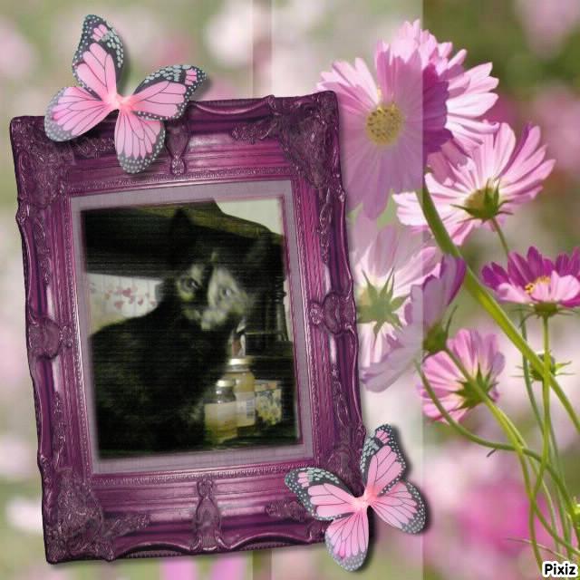 Charisma papillon